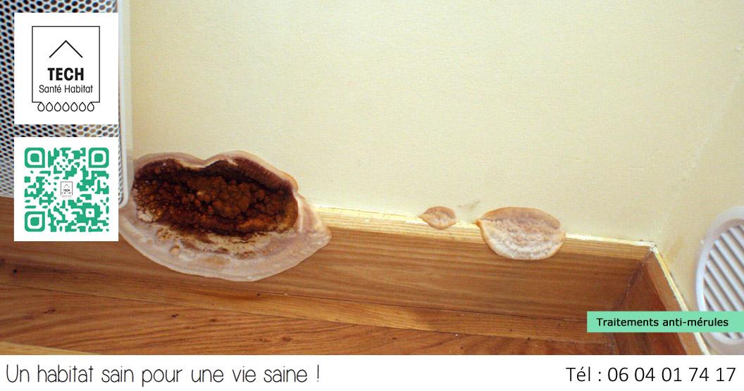 Tech sant habitat traitement anti moisissures for Condensation dans une maison